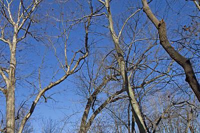 Virginia Photograph - Blue  by Betsy Knapp