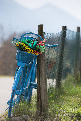 Photograph - Blue Bicycle by Maurizio Bacciarini