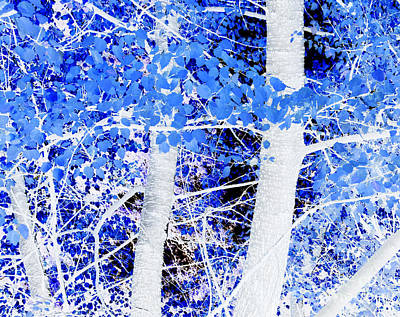 Photograph - Blue Birch Trees by Jim And Emily Bush