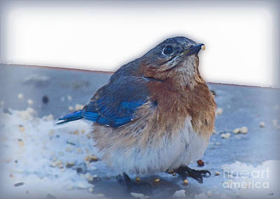 Photograph - Blue Bird 4 by Sandra Clark