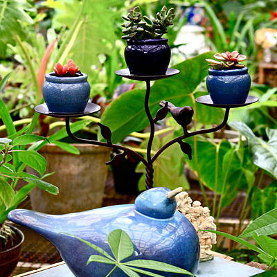 Photograph - Blue Bird And Flower Pots by Karon Melillo DeVega