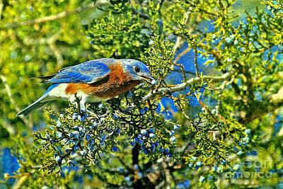 Photograph - Blue Bird Berries by Elizabeth Winter