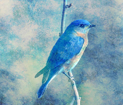 Bluebird Mixed Media - Blue Bird Blue Sky by Femina Photo Art By Maggie