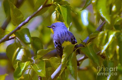 Blue Bird With A Yellow Throat Art Print by Jeff Swan