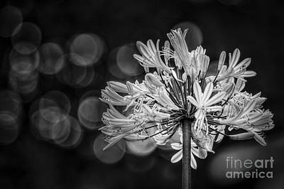 Blue Blooms B/w Art Print