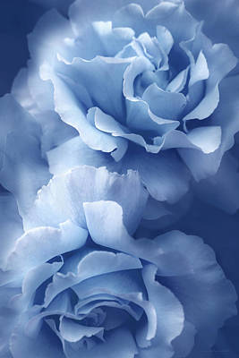Photograph - Blue Blue Roses by Jennie Marie Schell
