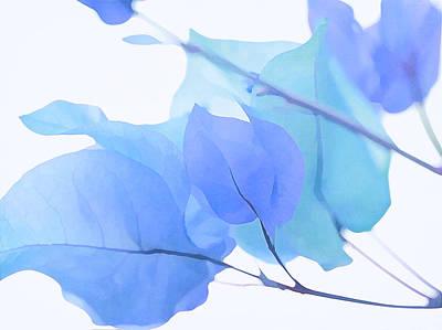 Photograph - Blue Bougainvillea by Fraida Gutovich