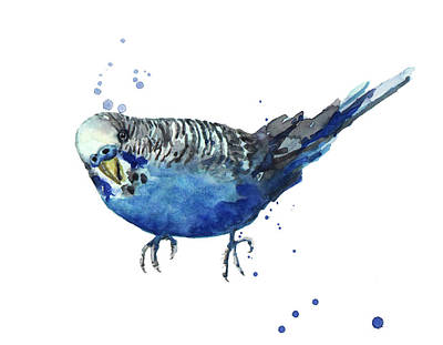 Parakeet Painting - Blue Budgerigar by Alison Fennell