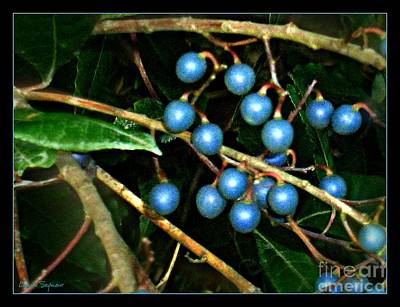 Art Print featuring the photograph Blue Bush Berries  by Leanne Seymour