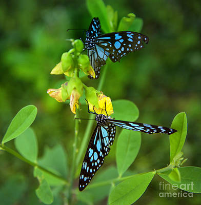 Blue Butterflies In The Green Garden Art Print by Regina Koch
