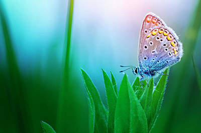Butterfly Photograph - Blue Butterfly by Avalon studio