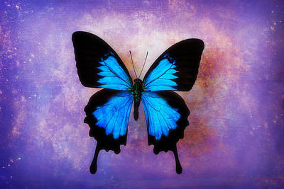 Warm Tones Photograph - Blue Butterfly Dreams by Garry Gay
