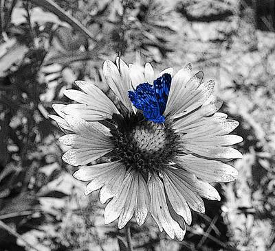 Photograph - Blue Butterfly by HW Kateley