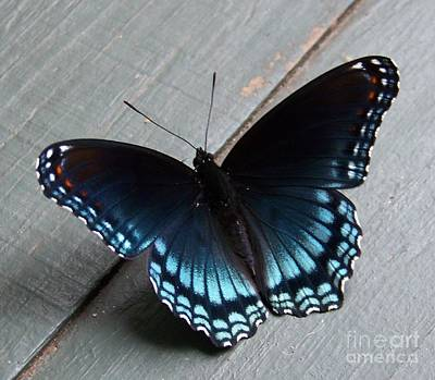 Photograph - Blue Butterfly by Jean Fry