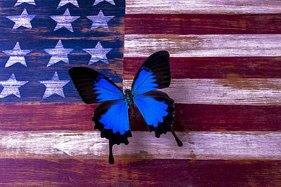 Star Spangled Banner Wall Art - Photograph - Blue Butterfly On American Flag by Garry Gay