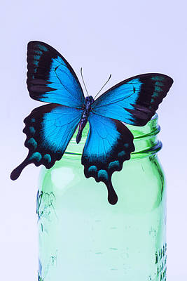 Blue Butterfly On Green Jar Art Print