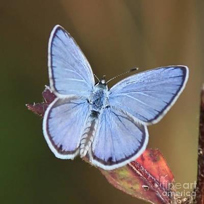 Blue Butterfly Square Art Print by Carol Groenen