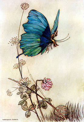 Blue Butterfly Art Print by Warwick Goble