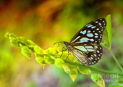 Blue Butterfly With Beautiful Colors Art Print by Gina Koch