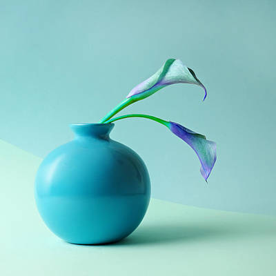 Blue Background Photograph - Blue Calla Lilies In Blue Vase by Juj Winn