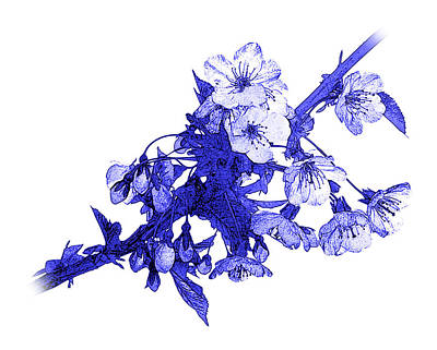Photograph - Blue Cherry by Jane McIlroy