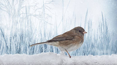 Blue Christmas Junco Art Print by Bill Tiepelman
