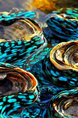Blue Clams Art Print by Casey Herbert