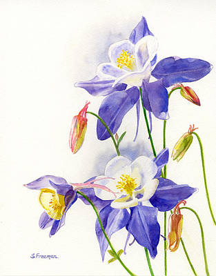 Aquilegia Painting - Blue Columbine Blossoms by Sharon Freeman