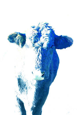 Digital Art - Blue Cow by Ann Powell