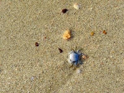 Neutral Photograph - Blue Crab by Leana De Villiers