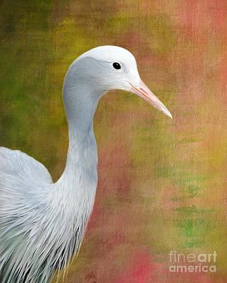 Blue Crane Art Print