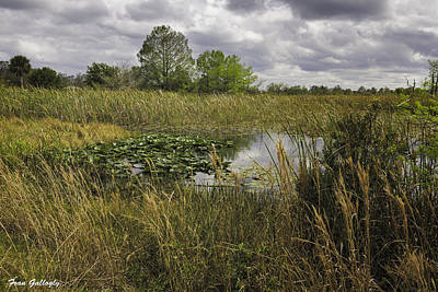 Blue Cypress Wetlands Art Print by Fran Gallogly