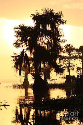 Blue Cypress Yellow Light Art Print by Paul Rebmann