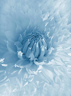 Photograph - Blue Dahlia Flower  by Jennie Marie Schell