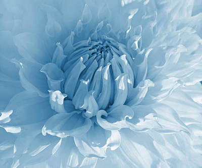 Photograph - Blue Dahlia Flower Macro by Jennie Marie Schell
