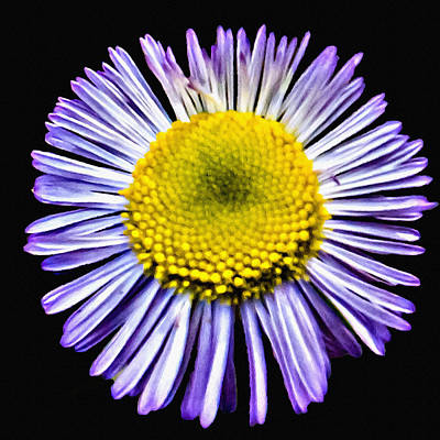 Photograph - Blue Daisy Painting by Bob and Nadine Johnston