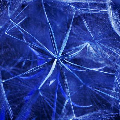Photograph - Blue Dandelion by James Eddy