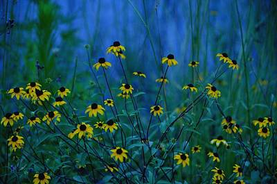 Photograph - Blue Dawn Wildflowers by Maria Urso