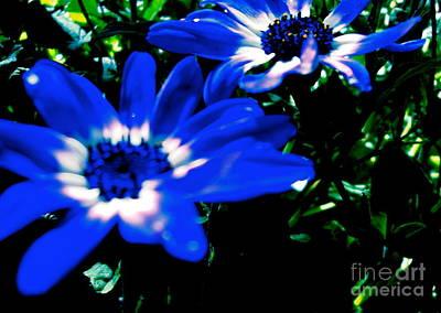 Blue Daze Art Print by Cathy Dee Janes