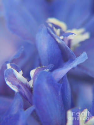 Photograph - Blue Delight by Jackie Farnsworth