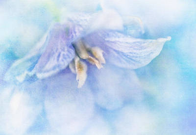 Delphinium Photograph - Blue Delphinium by David and Carol Kelly