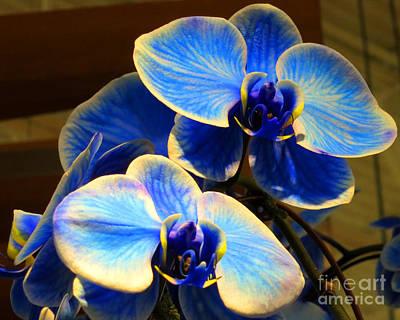 Blue Diamond Orchids Art Print by Patricia Januszkiewicz