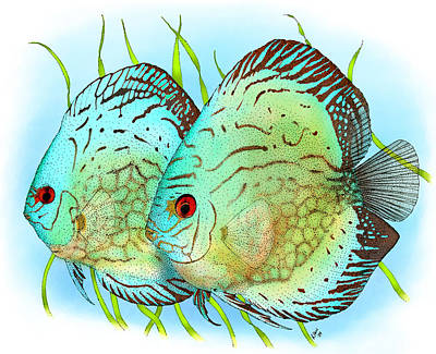 Photograph - Blue Discus Fish by Roger Hall