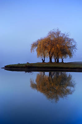 Tree Photograph - Blue Divine by Roman Solar