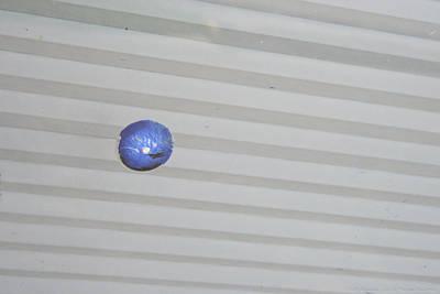 Photograph - Blue Dot by Teresa Blanton