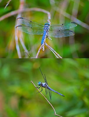 Blue Dragon Fly Art Print