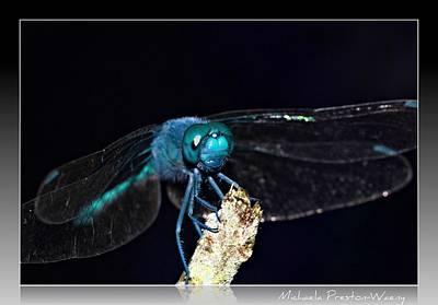 Photograph - Blue Dragon by Michaela Preston