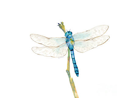 Animals Paintings - Blue Dragonfly by Amy Kirkpatrick