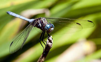 Blue Dragonfly Original by Greg Elk