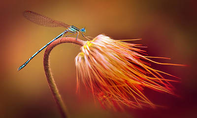 Blue Dragonfly On A Dry Flower Art Print